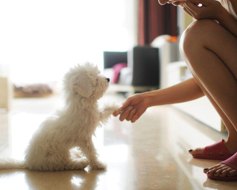 bí quyết dạy chó tuân lệnh chủ
