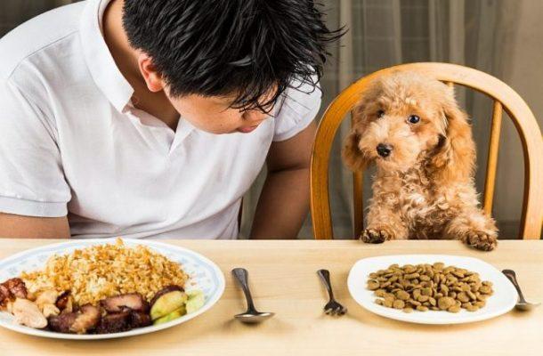 cách huấn luyện chó ngoan