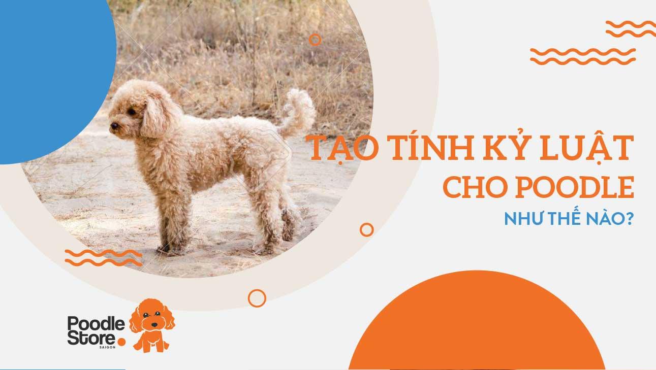 Tạo tính kỉ luật cho chó Poodle như thế nào?