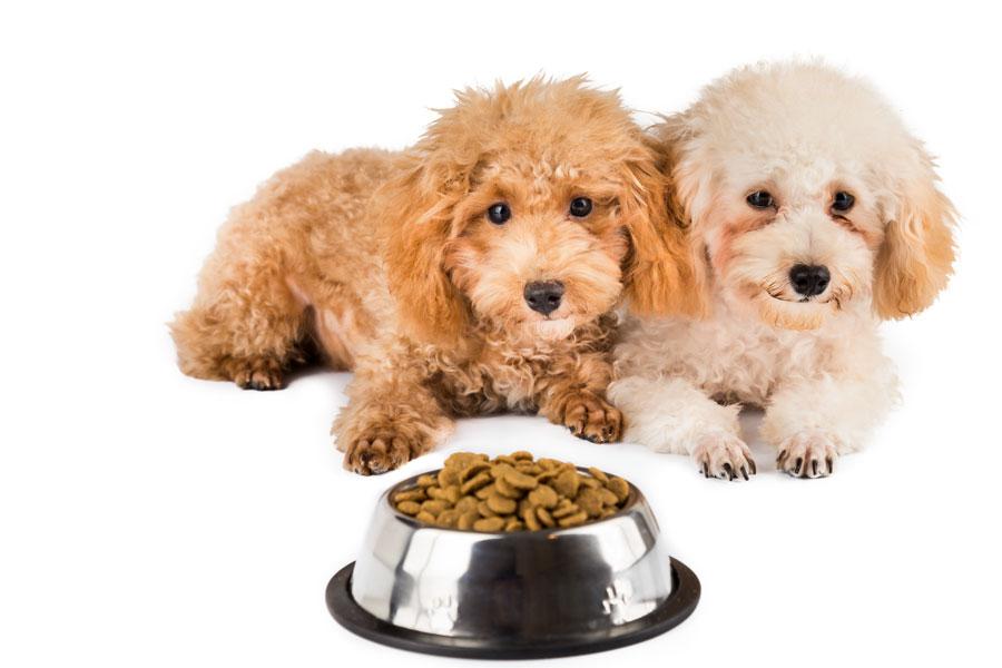 Hãy cho cún cưng của bạn một người bạn để chơi cùng