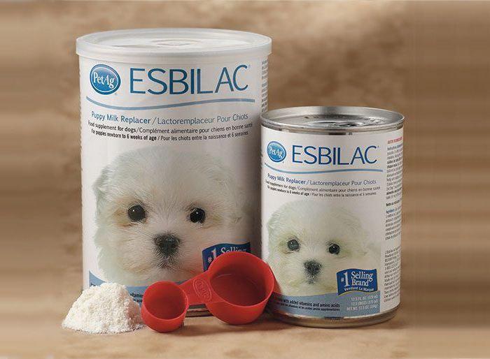 Các loại sữa chuyên dụng và thực phẩm bổ sung dành cho Poodle nhỏ.