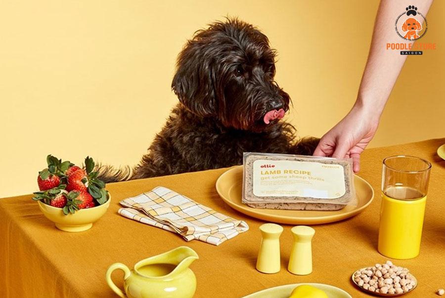 Chọn chế độ ăn thah mát cho Poodle