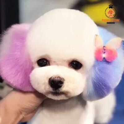 Hãy sử dụng thuốc nhuộm lông chuyên dụng dành cho thú cưng