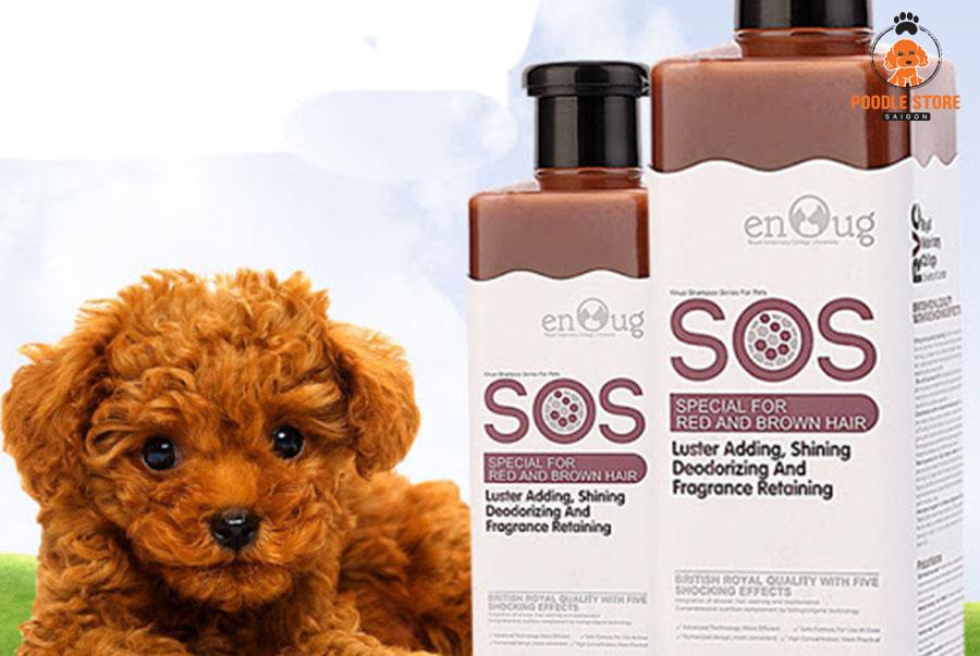 Chọn loại sữa tắm phù hợp với mỗi bé Poodle