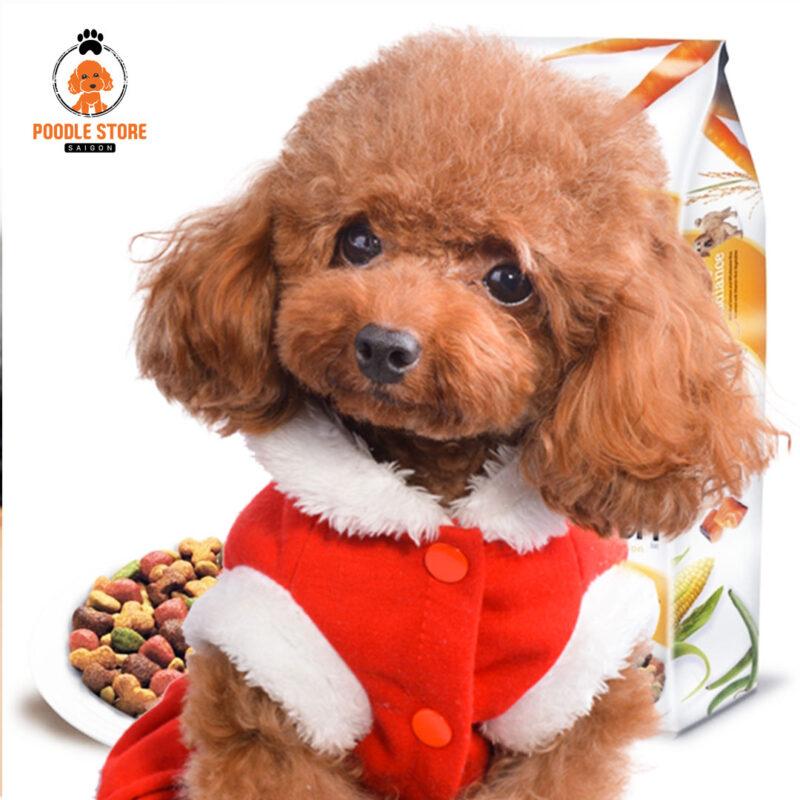 Chó Poodle nhỏ biếng ăn