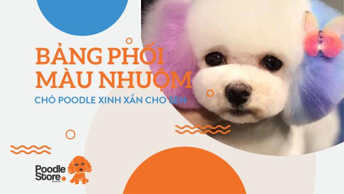 Bảng phối màu nhuộm chó Poodle xinh xắn cho sen.