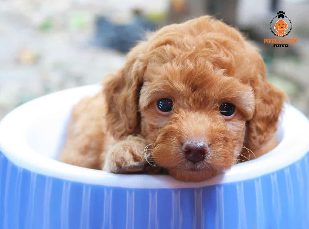Đưa chó đến phòng khám thú y theo yêu cầu của bác sĩ.