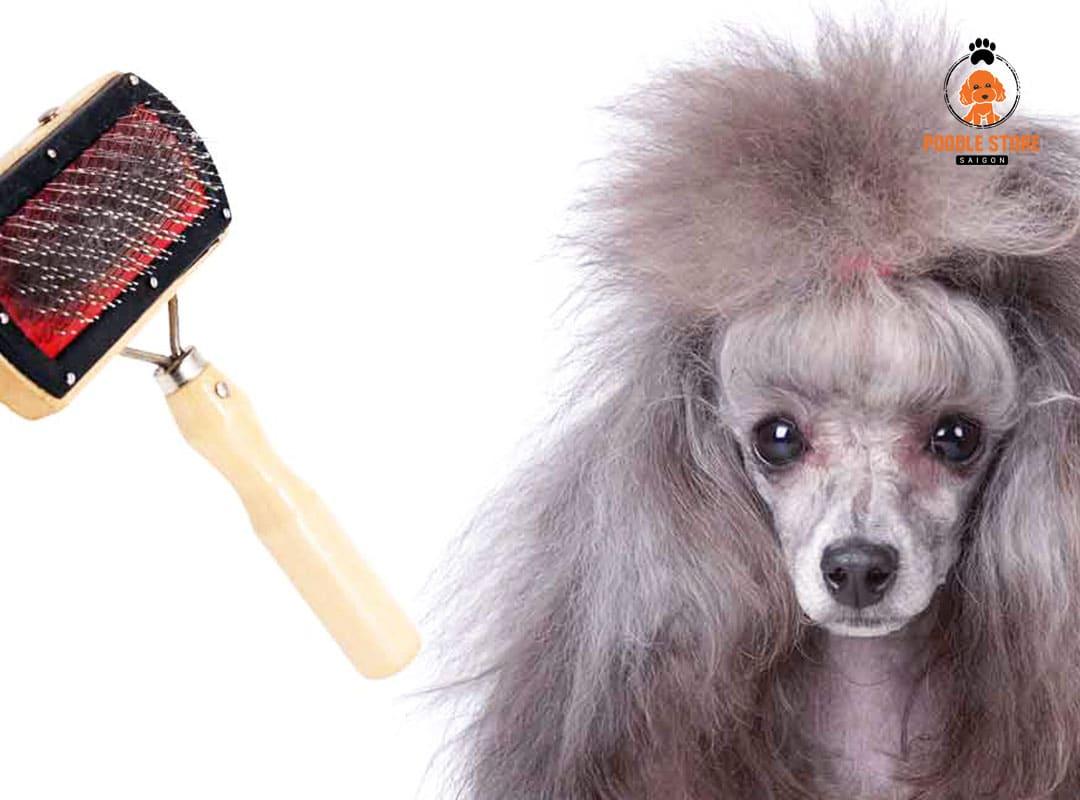 Chải lông Poodle là một trong những cách cơ bản nhất để chăm sóc lông cho bé.