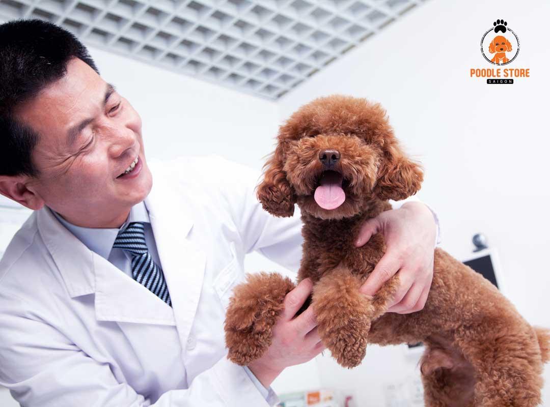 Ký sinh trùng khiến chó đi ngoài ra máu
