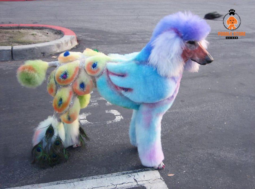 Một số lưu ý khi nhuộm lông cho Poodle.