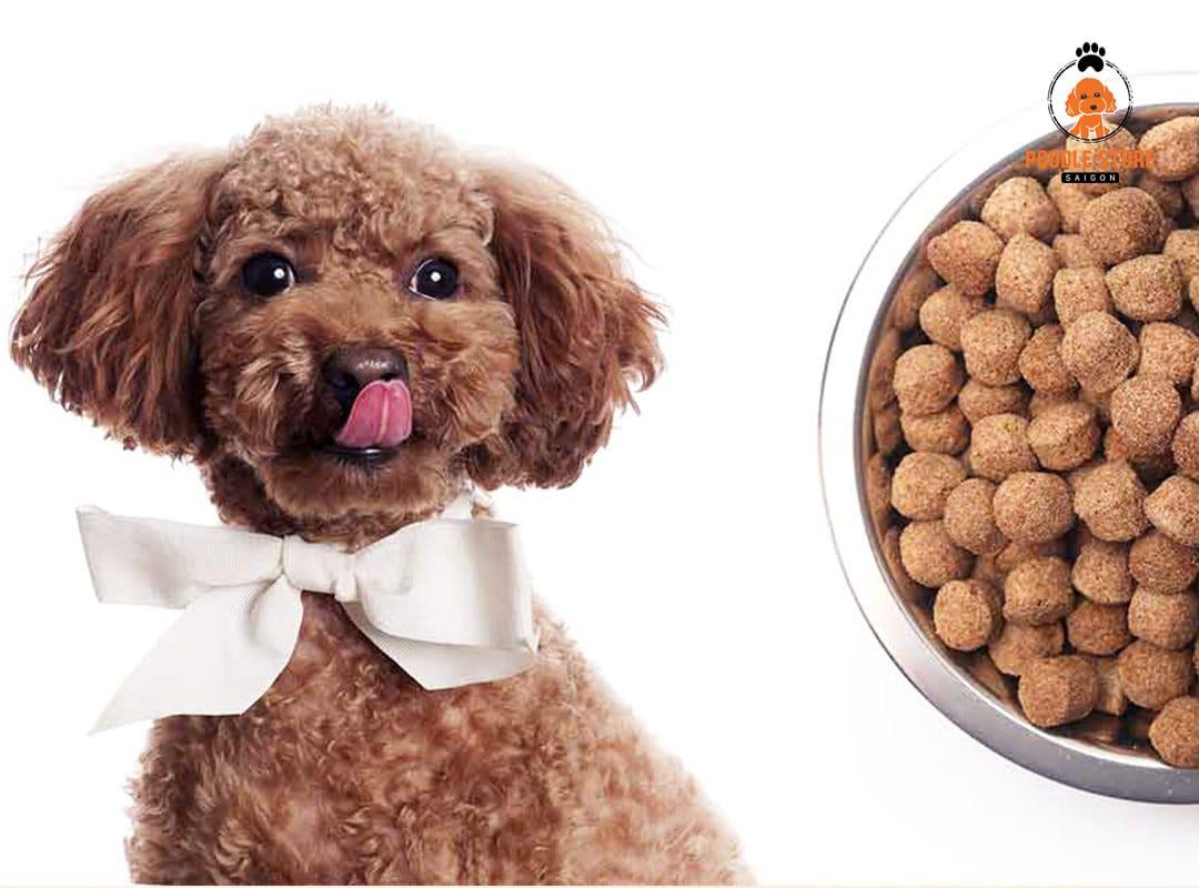 Phương pháp hạn chế chó Poodle bị tiêu chảy