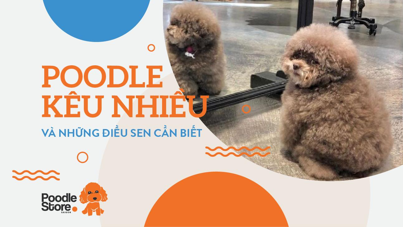 Poodle kêu nhiều và những điều sen cần biết