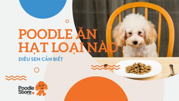Nên cho Poodle ăn loại hạt nào - điều sen cần biết
