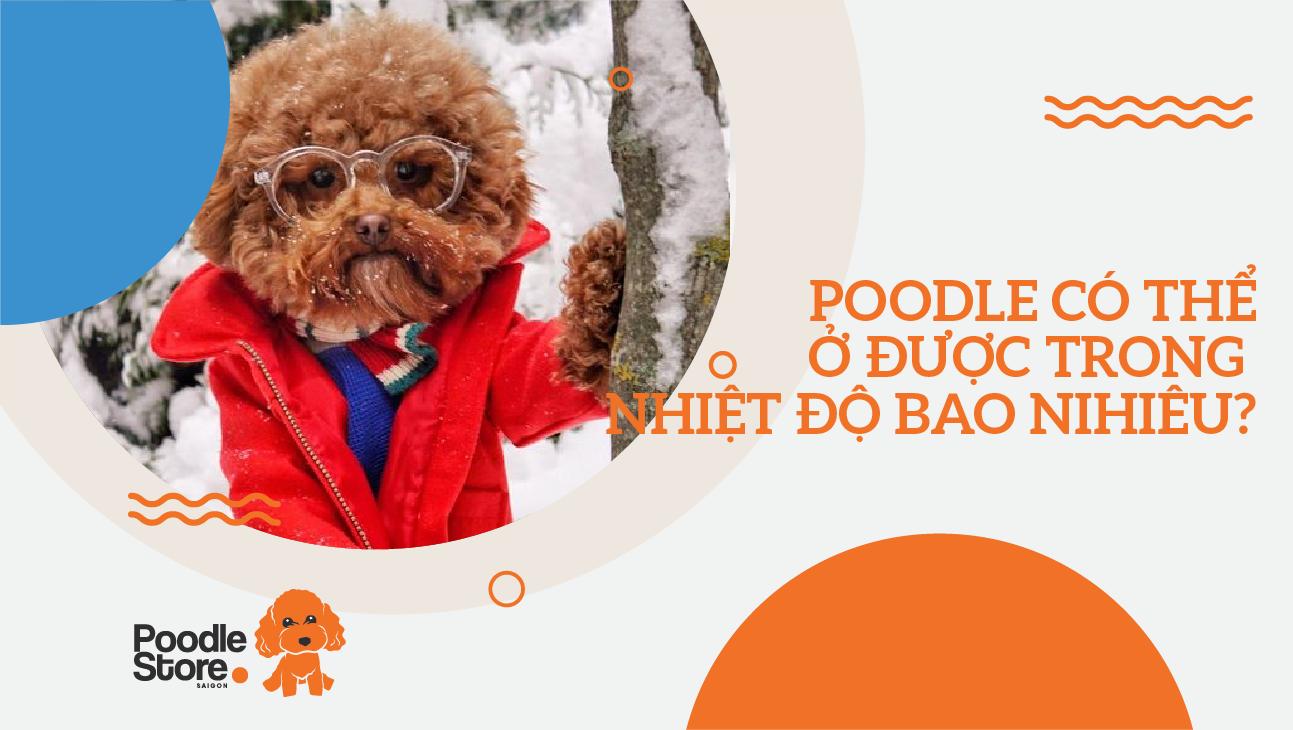 Chó Poodle có thể ở được trong nhiệt độ bao nhiêu?