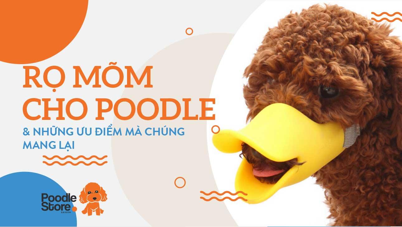 Rọ mõm Poodle và những ưu điểm mà chúng mang lại
